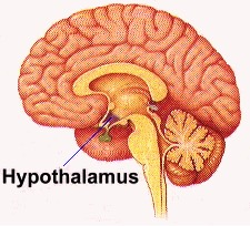 hypothalamus acupuncture continuing education CEUs