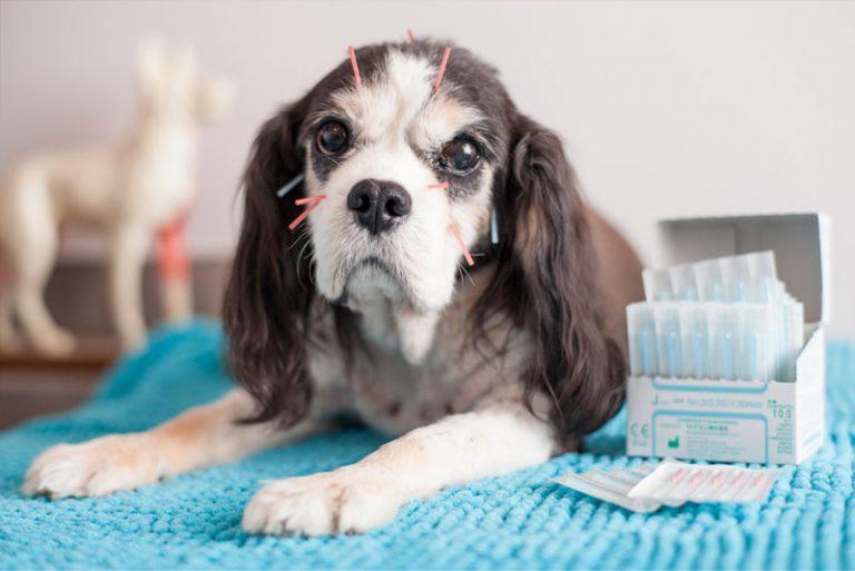Dog Acupuncture